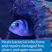 Heals open wounds and fin damage